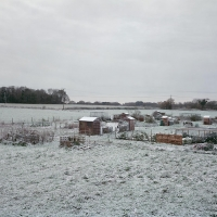 Allotments Saxlingham Nethergate 2015